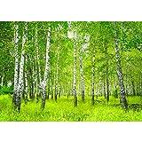 Vlies Fototapete 350x245 cm PREMIUM PLUS Wand Foto Tapete Wand Bild Vliestapete - SUNNY BIRCH FOREST - Birkenwald Bäume Wald Sonne Birkenhain Birke Birken Gras Natur Baum - no. 112