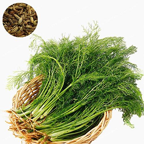 100 Pcs Fenouil Herbes Graines bricolage jardin ou en pot de jardin Graines de fleurs Graines de plantes faciles à cultiver Pour jardin Graines