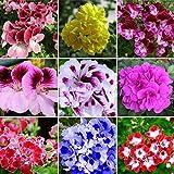 WuWxiuzhzhuo 50PCS semi misti geranio, Pelargonium Hortorum balcone fiori e piante da giardino 1