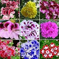 WuWxiuzhzhuo - 50 Semillas Mixtas de Geranio, Planta de Flores de Jardín de Pelargonium hortorum Balcón