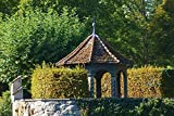 Artland Qualitätsbilder I Wandtattoo Wandsticker Wandaufkleber 60 x 40 cm Landschaften Europa Deutschland Foto Natur C1FB Laube im Konzilgarte in Konstanz