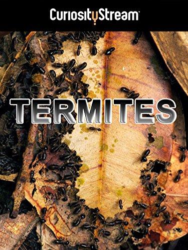 termites-the-inner-sanctum