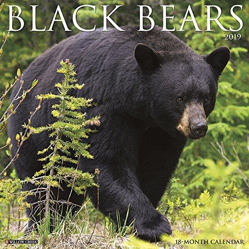 Black Bears 2019 Calendar
