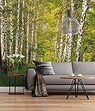 Sunny Decor - Fototapete BIRKENWALD - 368 x 254 cm - Tapete, Wand Dekoration, Wald, Baum, Birke, Natur, Landschaft -SD301