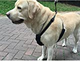 Cutepet Komfortables Hundegeschirr Reflektierend Nylon Brustgurte Strapazierfähig, Strapazierfähig Atmungsaktives VH-9028,Black,M