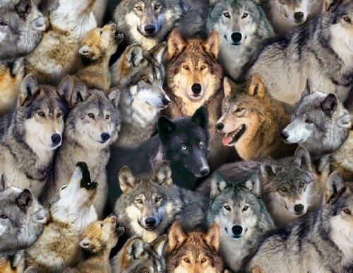 Fat Quarter Wölfe North American Wildlife Baumwolle Quilten Stoff-Wolf -