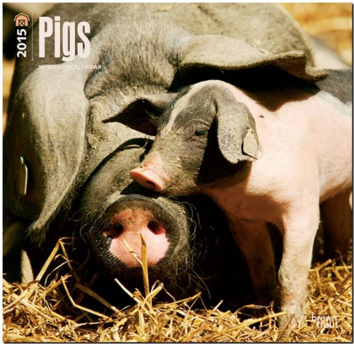 Pigs 2015 Wall