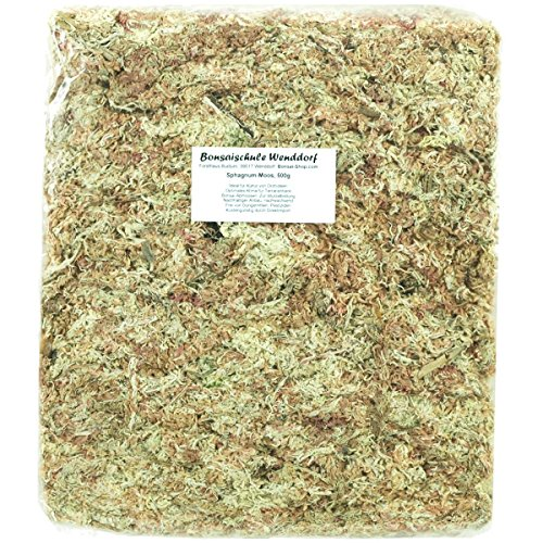 Mousse de sphaigne (Sphagnum), pour bonsaïs, reptiles, orchidées, 500g