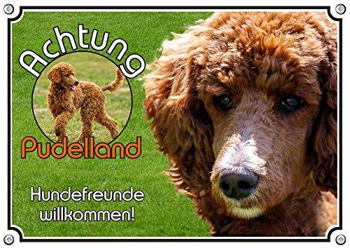 Petsigns Hundeschild Pudel apricot - Metallschild - stabil und haltbar - in Fotoqualität, 2. DIN A4 -