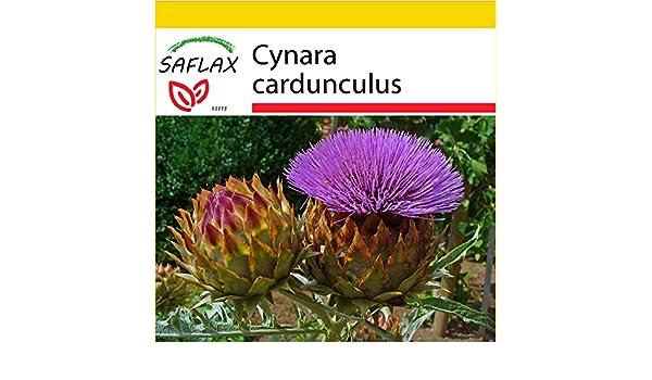 50 Samen Wilde Artischocke Spanische Artischocke Cynara cardunculus