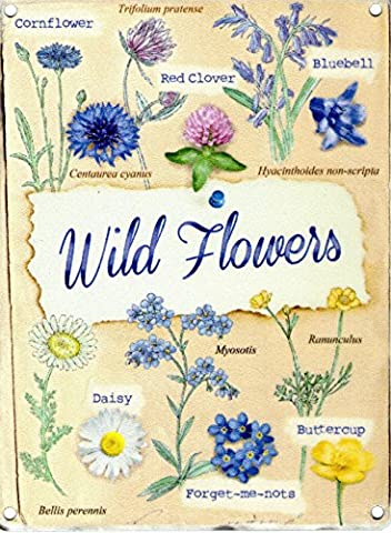 Wild Flowers - Pictures including titles. Daisy, buttercup etc. For