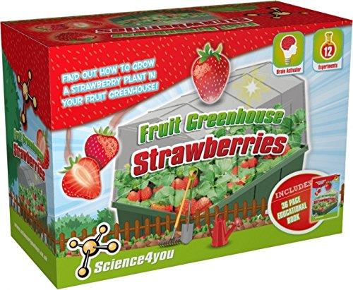 Science4you Obst Gewächshaus Erdbeeren