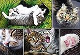 Puzzle 1500 Teile - Collage - Die Katzen