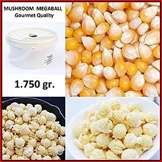 Mais für Popcorn Kinopopcorn. MAIS MUSHROOM für Rundes Popcorn XXL 1:60 Popvolumen – Feinschmecker-Qualität – Eimer 2,25 Liter. Inhalt: 1 750gr.