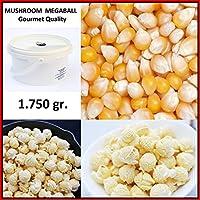 Palomitas de Maiz MUSHROOM MEGABOLA // REDONDAS EXTRA-GRANDES - Calidad Gourmet - Cubo