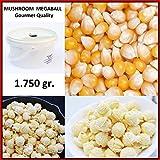 Mais für Popcorn Kinopopcorn. MAIS MUSHROOM für RUNDES, EXTRA GROSSES Popcorn – Feinschmecker-Qualität – Eimer 2,25 Liter. Inhalt: 1 750gr.