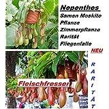 20x Nepenthes Graines Moustique Plant Plantes D'intérieur Rarité Piège À Mouches Graines Accroche-regard Plant Rarité #236