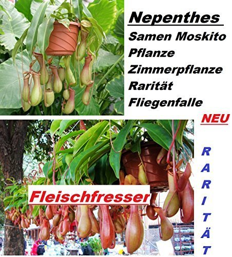 20x-nepenthes-semillas-mosquito-planta-plantas-habitacion-rareza-atrapamoscas-semillas-centro-de-ate