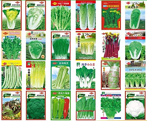 Shoopy Star Gombo: paquet de détail coloré économique NON OGM image Jardin Jardin Graines de légumes