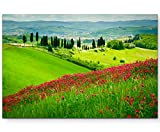 Paul Sinus Art Leinwandbilder | Bilder Leinwand 120x80cm Blumenwiese mit Zypressen Toskana – Italien
