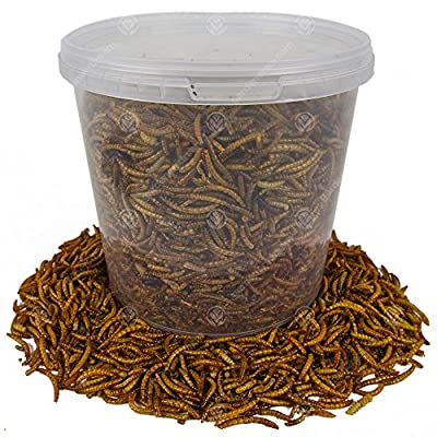 GardenersDream Dried Mealworms 2KG - High Quality Premium Food for Wild Birds by GardenersDream