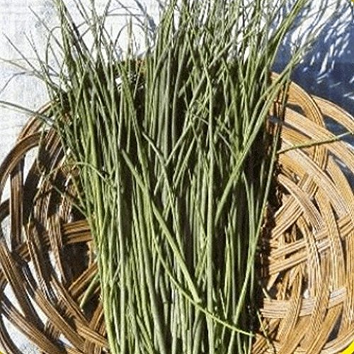 CSNCH 1/4 Lb Chives Herb Seeds