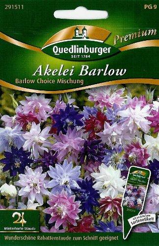 Akelei, Barlow Choice Mischung