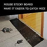 Piège à Souris Super Colle Plaque Glu Réutilisable pour Attrape Rats Efficace Tapette à Souris Collant Grande Surface Contre Les Souris, Les Rats (1pc)