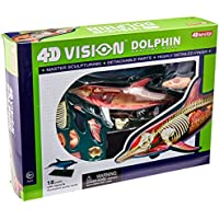 Famemaster 4D-Vision Dolphin Anatomy Model by Fame Master