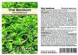 Seedeo Basilikum Thai Basilikum (Ocimum basilicum) 100...