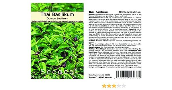 Basilic thaibasilikum Siam Queen