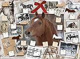Pferde - das Glück der Erde
