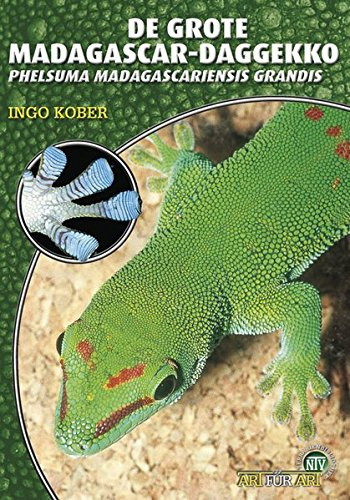 Grote Madagascar-Daggecko (niederl.) (Art für Art / Terraristik)