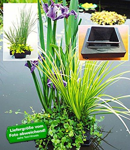 BALDUR-Garten Wasserpflanzen-Insel mit Schwimmring,1 Komplett-Set mit Wasserpflanzen und Teichpflanzen