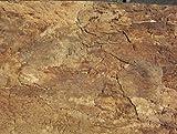 Iberia Kork-Zoobedarf Pannello posteriore in sughero interno 60 x 30 cm, terrario, parete posteriore in sughero (92015)