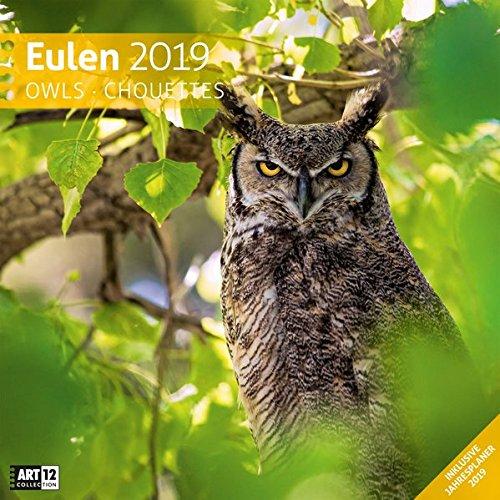 Eulen 2019, Wandkalender / Broschürenkalender im Hochformat (aufgeklappt 30x60 cm) - Geschenk-Kalender mit Monatskalendarium zum Eintragen