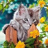 Verspielte Katzenbabys 2017 - Bildkalender - (33 x 33)