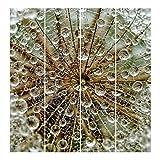 Bilderwelten Schiebegardinen Pusteblume im Herbst - Deckenhalterung, 4X 250 x 60cm