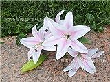 HUAYIFANG Parfum Parfum Lily Lily Fühlen Simulation Blume Blumen Hochzeit Erdgeschoss Wohnzimmer Schlafzimmer Single Rosa
