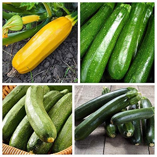 Courgettes - les meilleures variétés pour letcho - set de 4 variétés - 4 paquets de graines