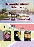 Mini-Gewächshaus - Südafrika - mit Samen der Königsprotea, Paradiesvogelblume und Protea exima