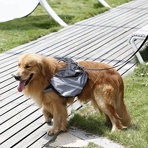 Imagen de anself  de perros de mascota para excursión acampa al aire libre alternativa