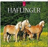 Haflinger 2016: Original Stürtz-Kalender - Mittelformat-Kalender 33 x 31 cm [Spiralbindung]