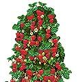 Früh tragende Hänge-Erdbeeren Frische Pflanzen mit großen Früchten. Wahlweise 3 oder 6 Pflanzen von Lifestyle-Hamburg Pflanzenraritäten auf Du und dein Garten