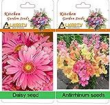 alkarty Daisy and antirrhinum winter flo...