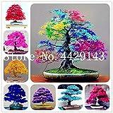 IDEA HIGH Samen-30 stücke Japanischen ahorn pflanzen Seltene Regenbogen Farbe Sehr Schöne Japan Pflanzen Für Diy Hausgarten Bonsai Baum Geschenk: gemischt
