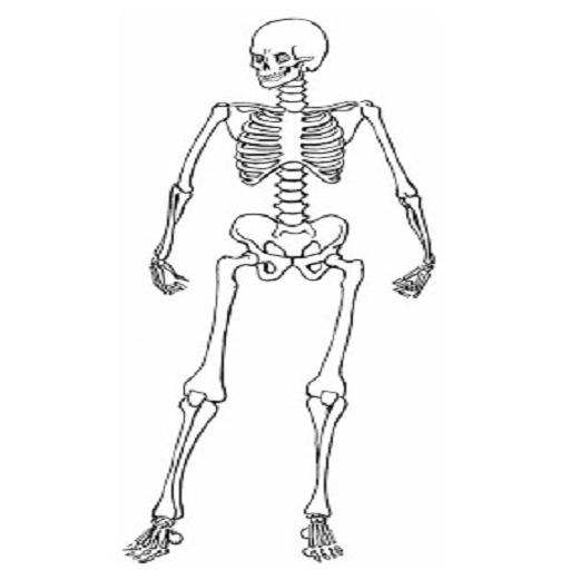 (Halloween Dancing Skeleton Live Wallpaper)