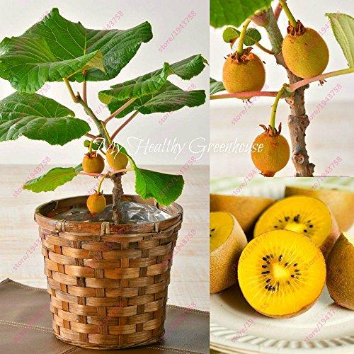 AGROBITS 200 semillas piezas kiwi miniatura semillas