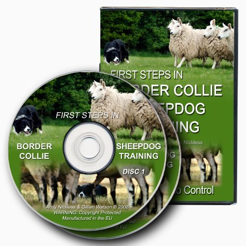 first-steps-in-border-collie-sheepdog-training-dvd
