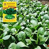 CWAIXX Farmer es vier Jahreszeiten Gartenterrasse im Frühjahr Gemüse Samen säen Gemüsesamen eingemachte Früchte Erdbeere Lauch und Koriander, Kleinem Gemüse